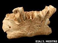 Найденная в Испании челюстная кость, как предполагают ученые, принадлежала женщине