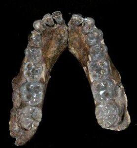 человеческие останки возрастом 2,8 миллиона лет