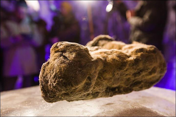 древний пещерный лев