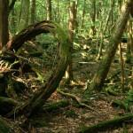 Лес самоубийц (Аокигахара, Япония)