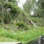 Последствия прохождения торнадо в Кировской области