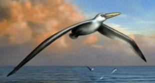 o chem oni mogut rasskazat ostanki samoj drevnej pticy v mire 7d9e381