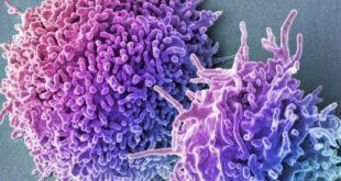 Обнаружены клетки, восстанавливающие ткани