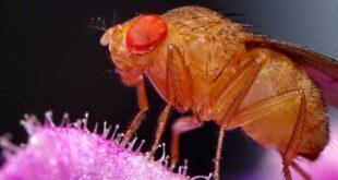 otkuda berutsja fruktovye moshki v dome ee71fb1