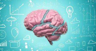 uchenye vyjasnili pochemu v mozgu rozhdajutsja mysli i mozhno li prozhit bez nih 39ed414