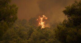 Разработана противопрожарная смесь для лесов