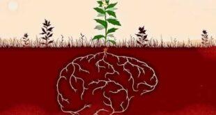 Растения передают потомкам воспоминания о холодных зимах