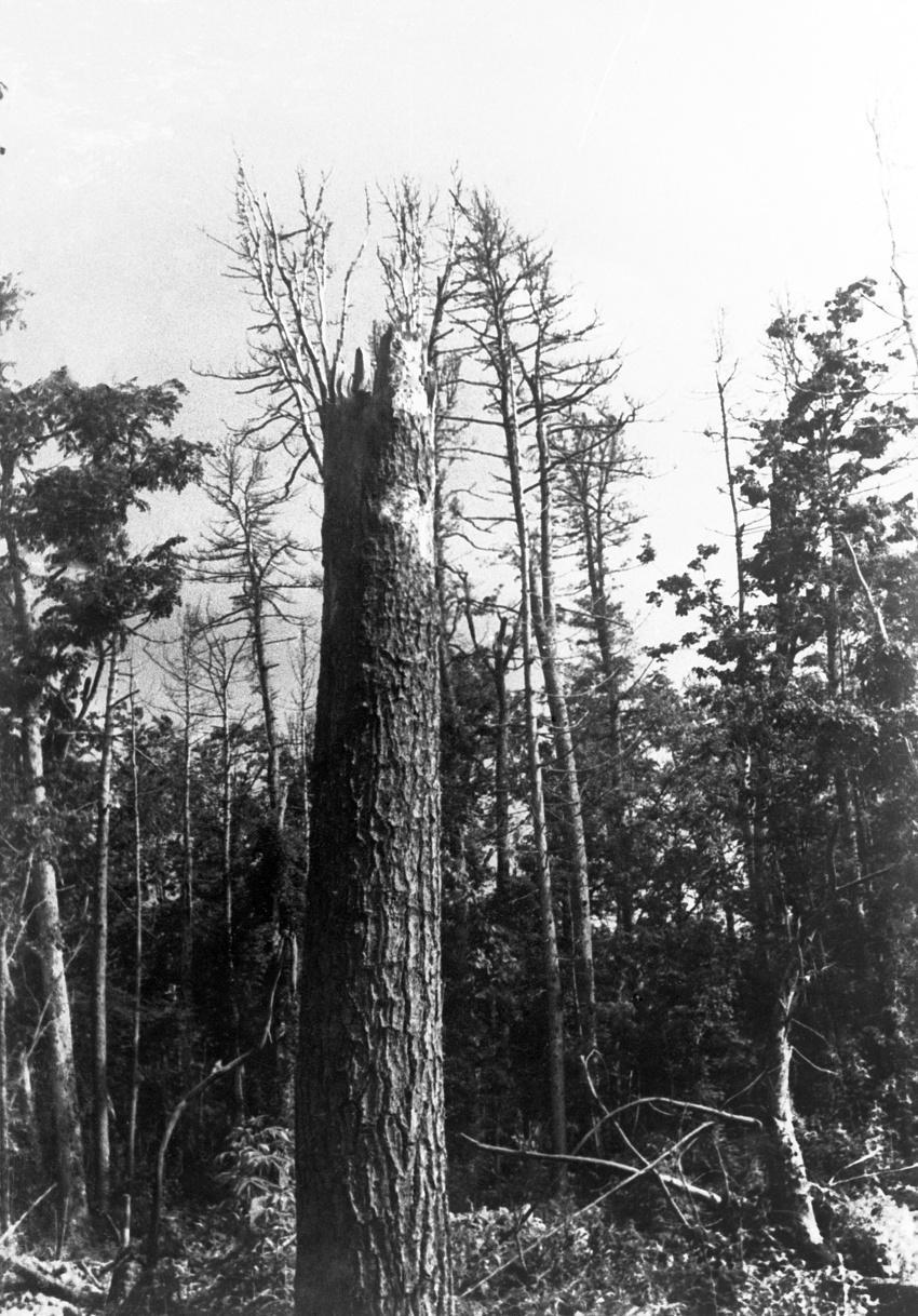 Сихотэ-Алинский метеорит, 1947 год